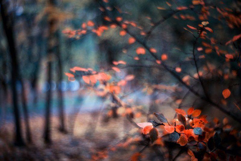 осень, , парк, , рисунок, meyer, primoplan рисует осеньphoto preview
