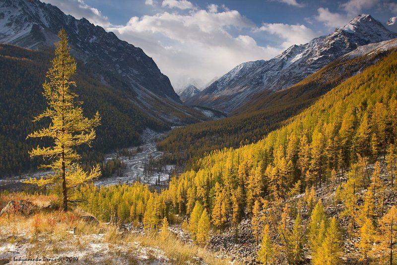 2014, Алтай, Горы, Деревья, Маашей, Небо, Облака, Осень, Река, Россия, Сентябрь, Снег ***photo preview