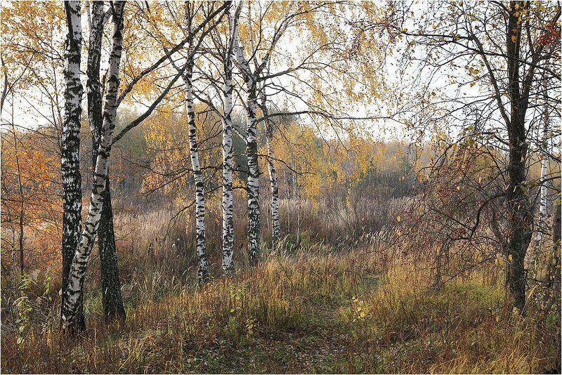 Осенняя пора.photo preview