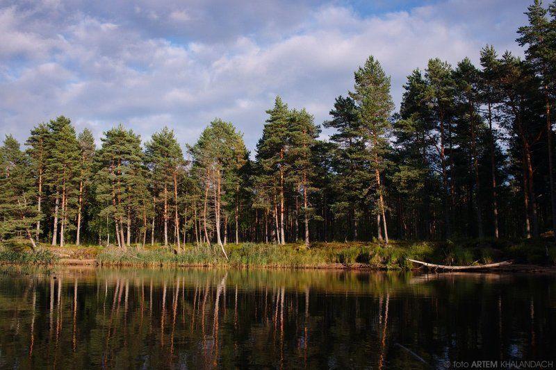 Лес у озераphoto preview