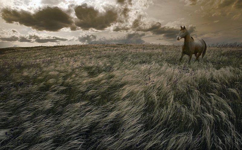 комп-арт, ковыль, конь, свобода, воля Свободаphoto preview