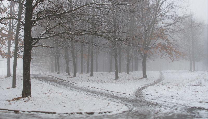 Первые снежные дниphoto preview