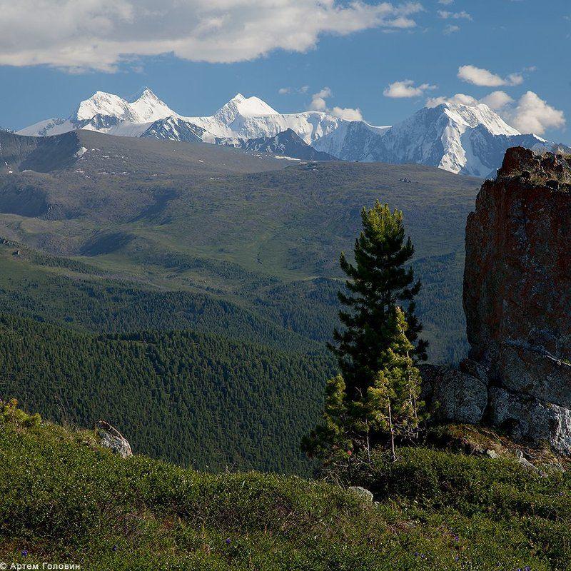 Алтай, Белуха, Камень, Кедры Белуха, кедр и каменьphoto preview