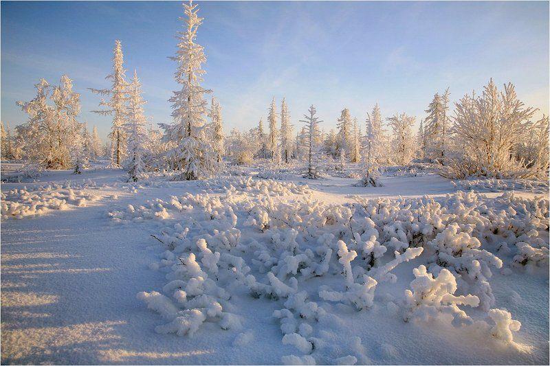 Зима снег, Тундра, Ямал В тундре Ямала.photo preview
