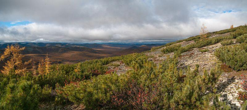 якутия, осень, лиственница, трасса, колыма Якутия. Осень.photo preview