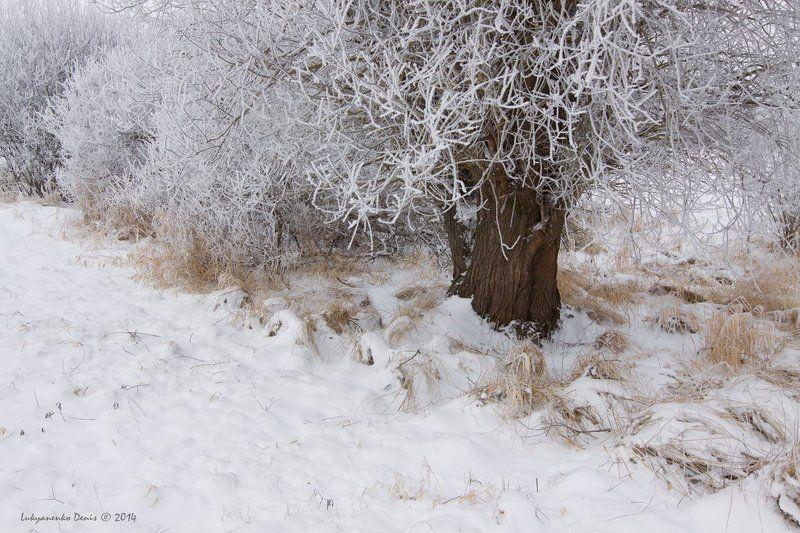 2014, Деревья, Зима, Иней, Россия, Снег, Трава ***photo preview
