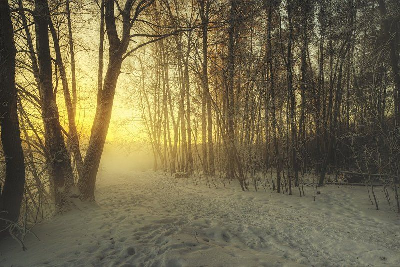 Зима, Лес, Пар, Пейзаж, Подмосковье, Природа, Река, Россия, Туман Winter Storyphoto preview