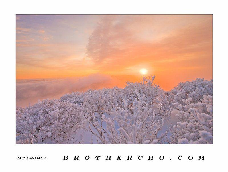 CLOUDSEA, HOARFROST, MT.DEOGYU, SUNRISE, WINTER WINTER GARDENphoto preview