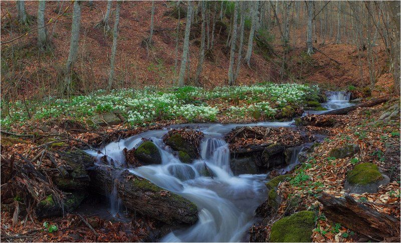 ранняя весна в Адыгееphoto preview