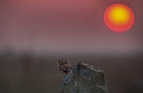 Owl & Sunset