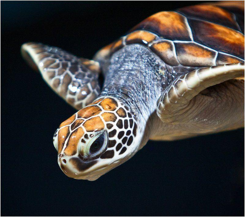 Животные Turtlephoto preview