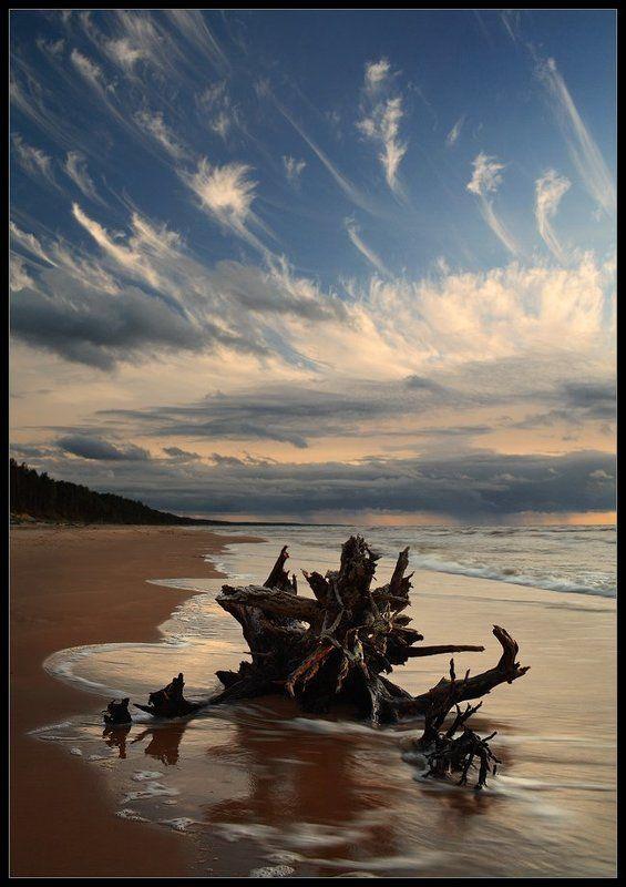 коряга, облака, море, вечер ***photo preview