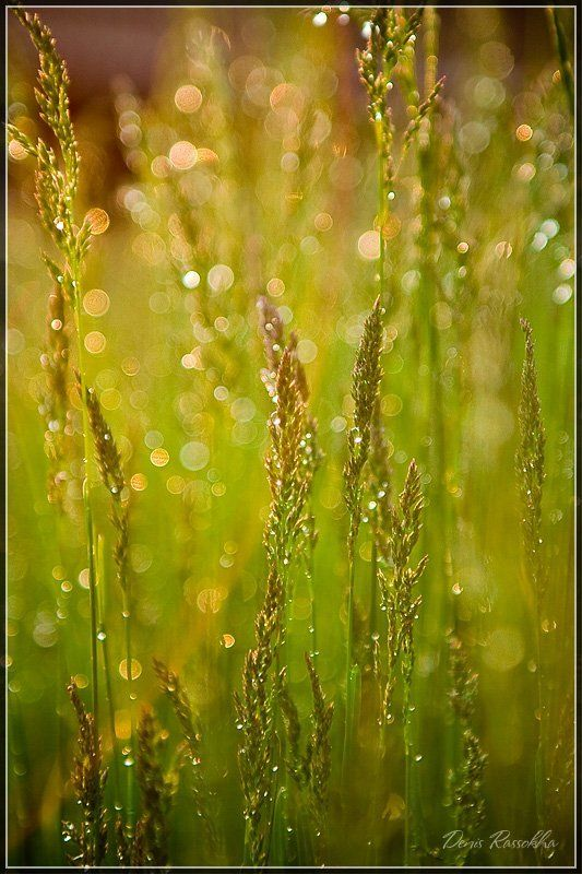 вечер, трава, дождь вечер, после дождяphoto preview