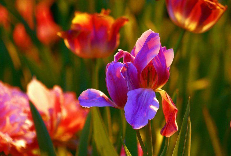 цветы Скоро Веснаphoto preview