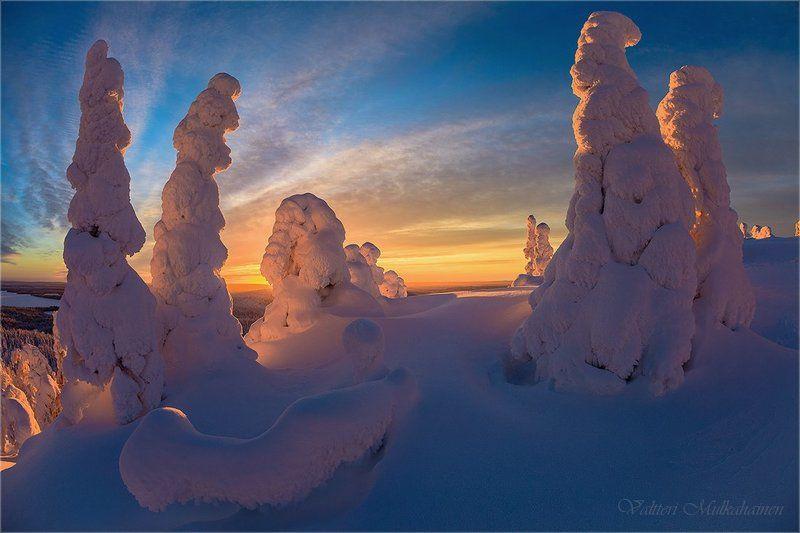Зимние стражи ...photo preview