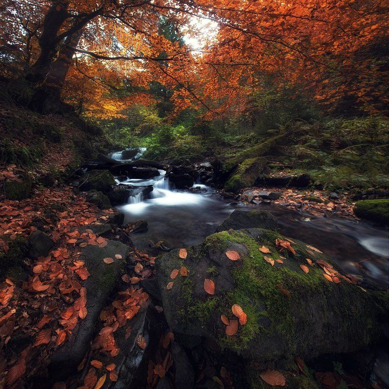 Осенний Шипотphoto preview