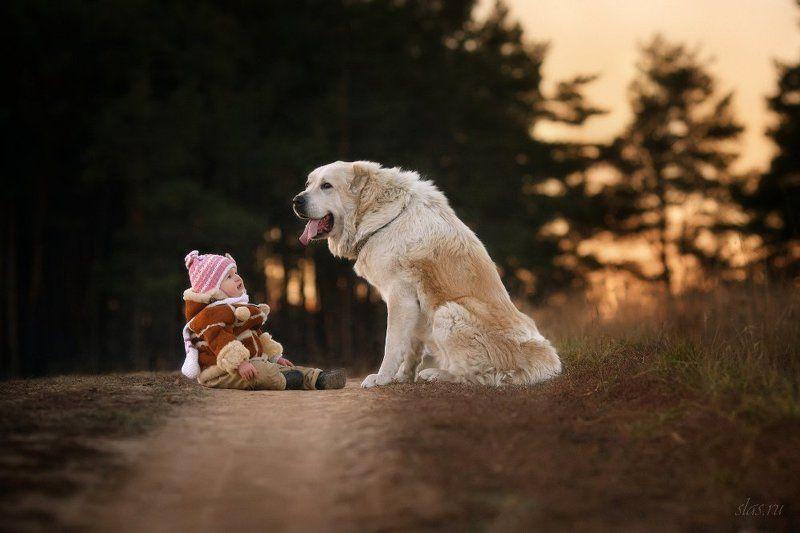 дети, собака, алабай Посиделкиphoto preview