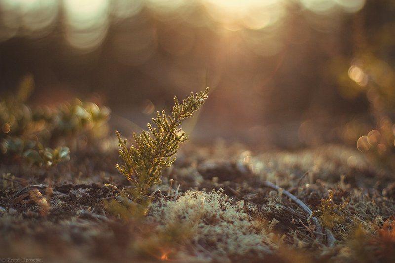 макро, осень, кольский полуостров Осеннее настроение.photo preview