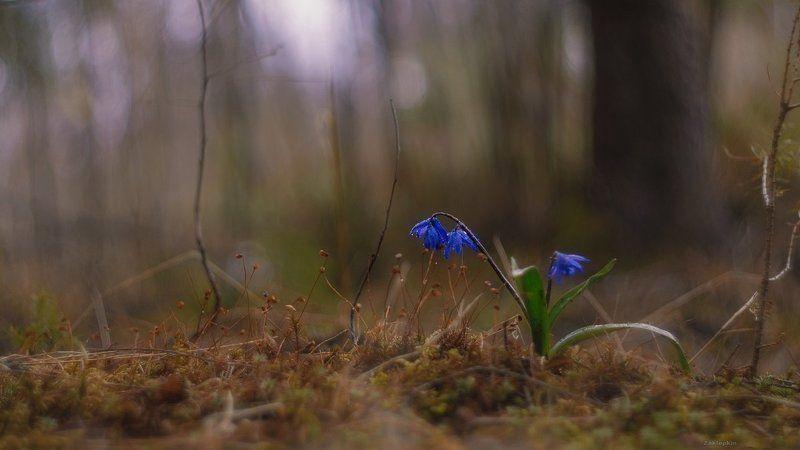 макро, цветы Первый дачныйphoto preview