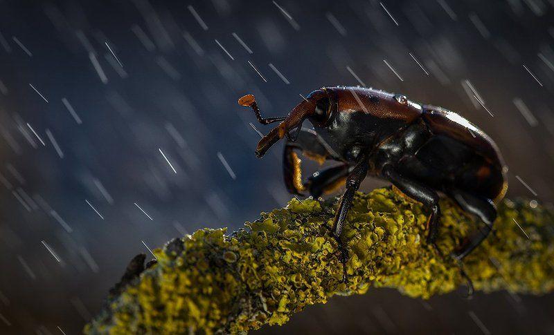 Дождик.photo preview
