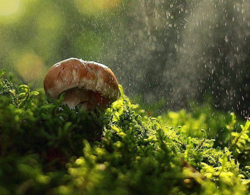 гриб, макро, мох Груздьphoto preview