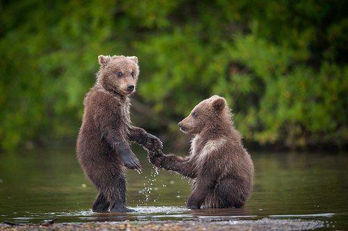 Превед , Медвед !