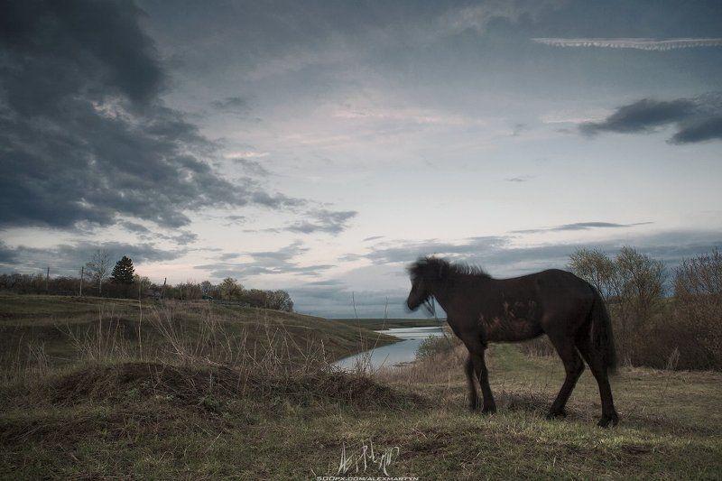 Движение, Живопись, Конь, Небо, Пейзаж, Поле, Простор, Тульскаяобласть ***photo preview