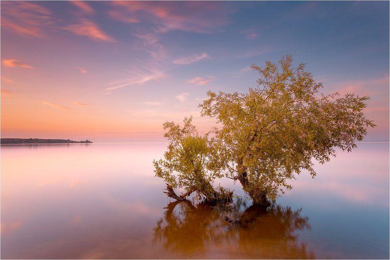 long exposure, закат, вода, дерево, serenityphoto preview