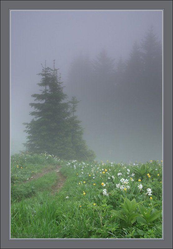 Туман с ароматом нарциссовphoto preview