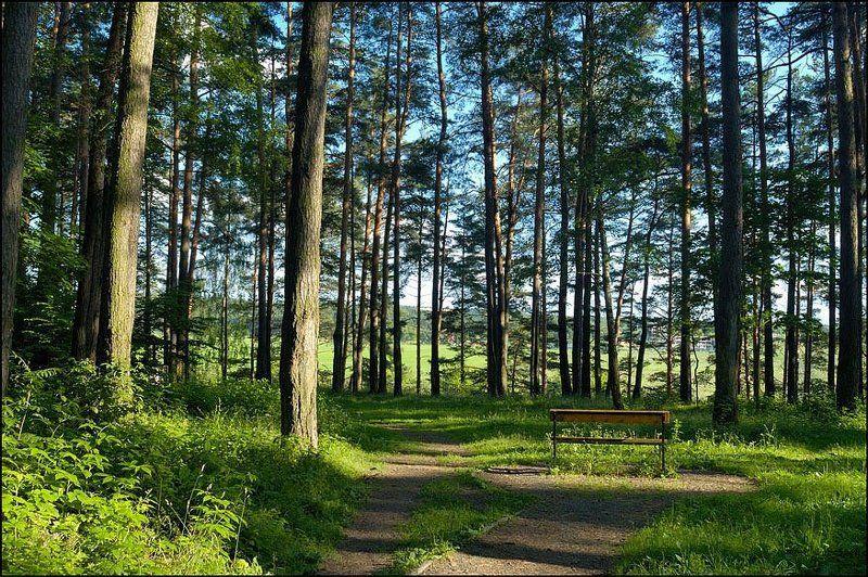 лес, трава, зелень, свет Любимое местоphoto preview