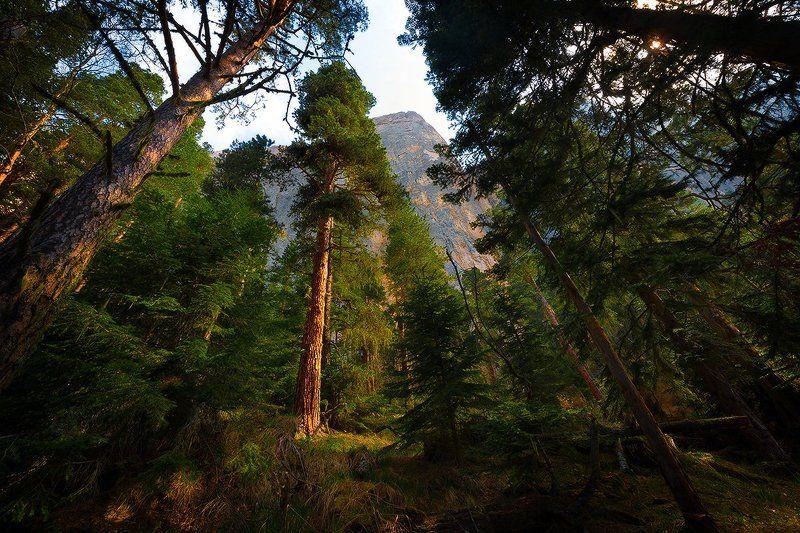 В сосновом лесу под Большим Тхачомphoto preview