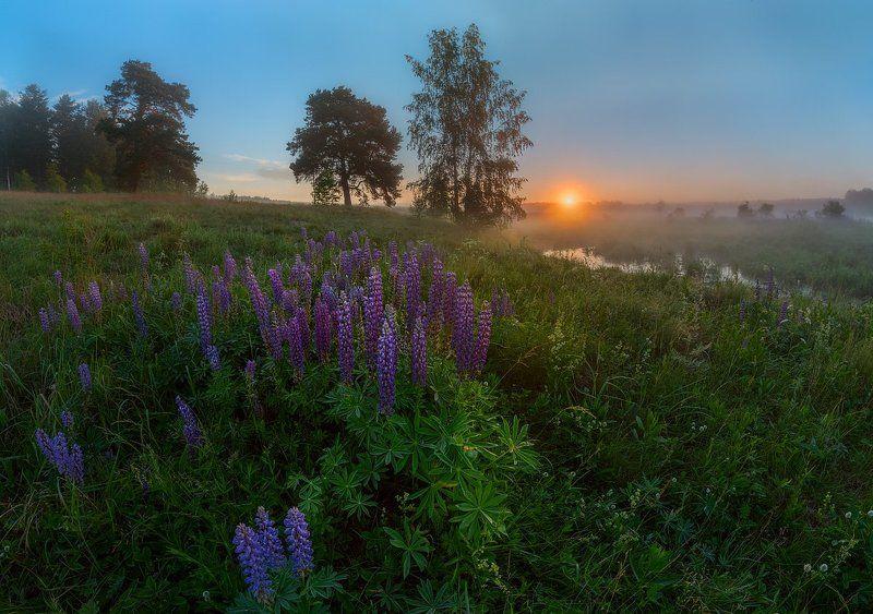 цветы, люпины, гвоздики, рассвет, утро,  Царство цветовphoto preview