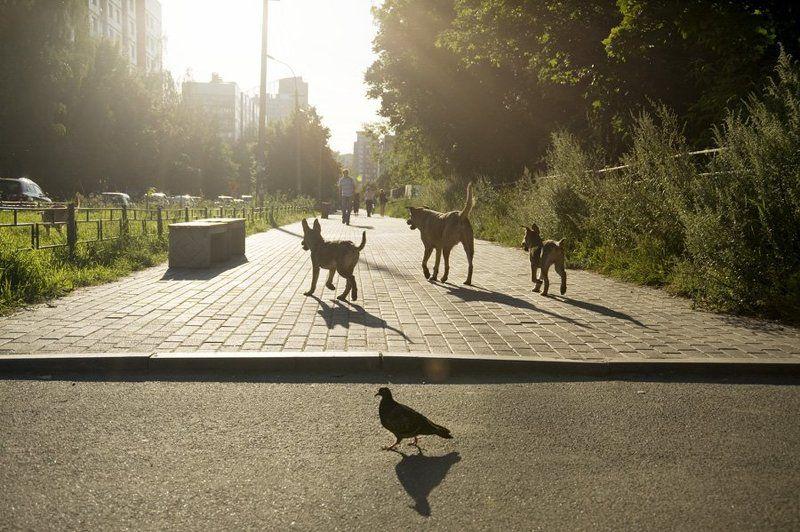 собаки,голубь,город,контровой,аллея Городская жизньphoto preview