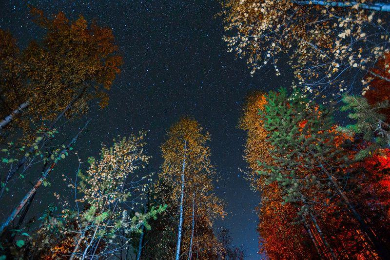 звёзды ночь астрономия вечер осень Если поднять взгляд...photo preview