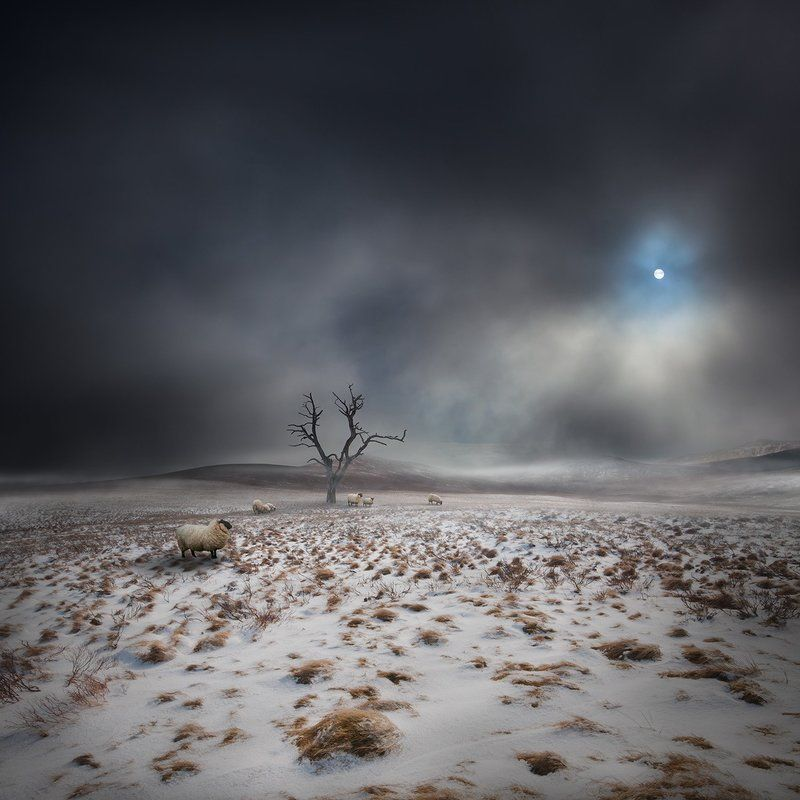 Conceptual, Dark, Landscape, Mood, Mystery Land OF THe Midnight Sunphoto preview