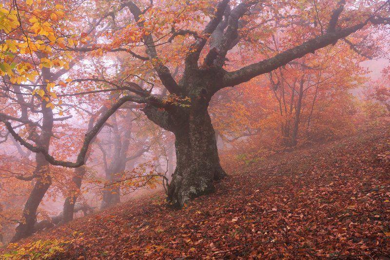 лес, демерджи, осень, туман Золото Демерджиphoto preview