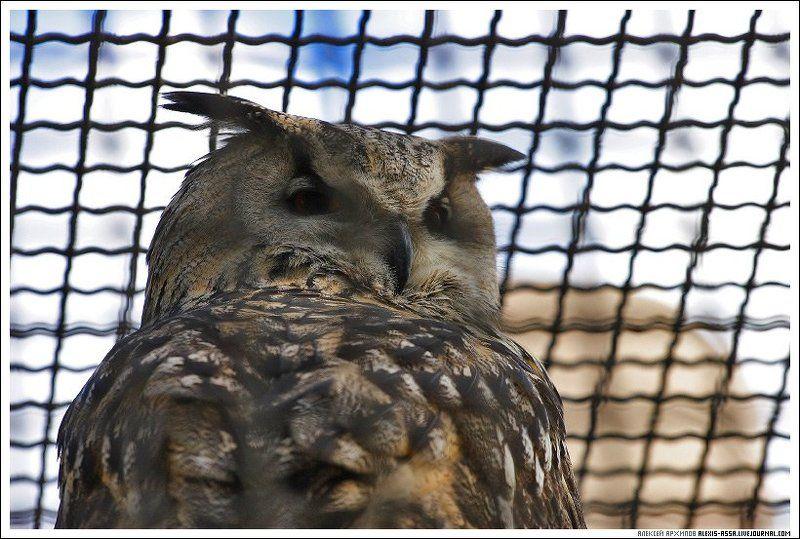 московский, зоопарк, сова Сова.photo preview