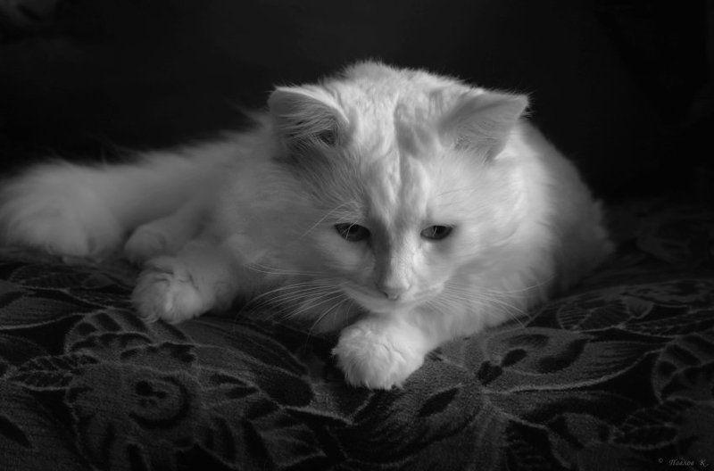 кот, зима, похожий На зиму похожий...photo preview