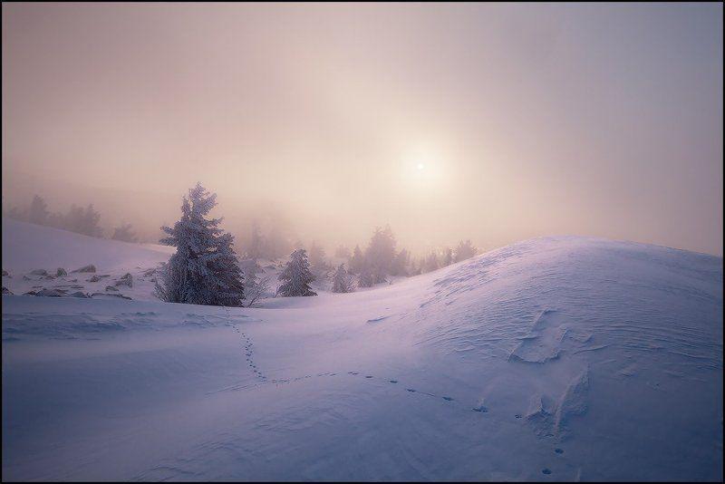 верблюды, зима, облако, туман, шерегеш, ярославский виталий Верблюды в Облакахphoto preview