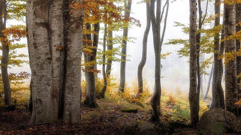 българия, витоша, гора, тумань Перед взором лесаphoto preview