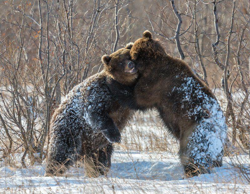 Хорошо по первому снегу...потрепать загривок соседуphoto preview