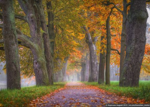 про Осенние аллеи...