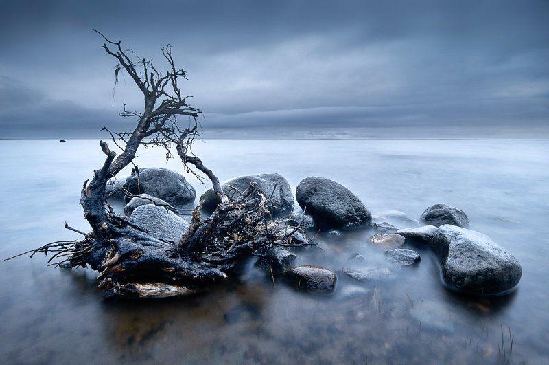Сестрорецк, Финский залив Финский залив.photo preview