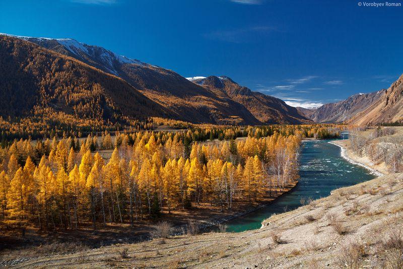 Алтай, Горы, Золотая осень Золото Алтайских горphoto preview