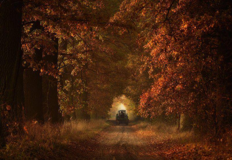 Autumn time...photo preview