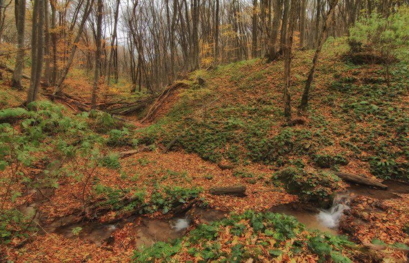 Лесной ручейphoto preview