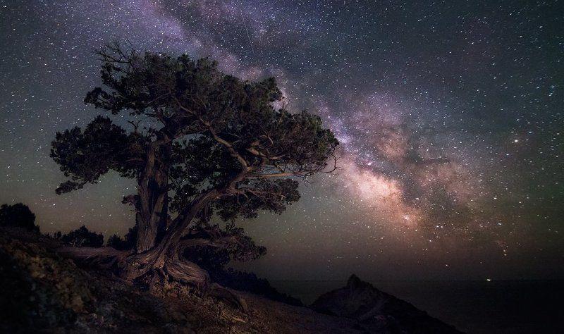 Астро, Дерево, Звёзды, Крым, Млечный путь, Ночь В можжевеловой рощеphoto preview