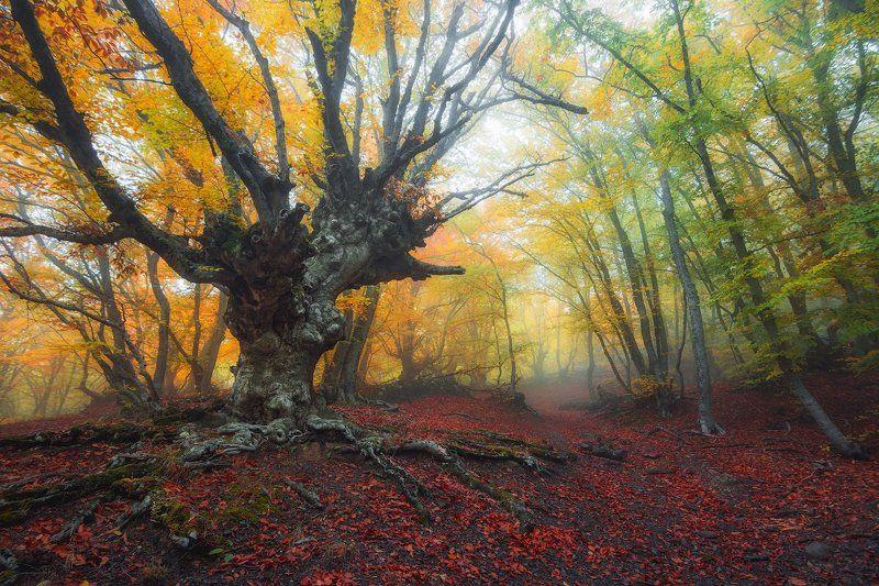 демерджи, крым Буковый лес Демерджиphoto preview