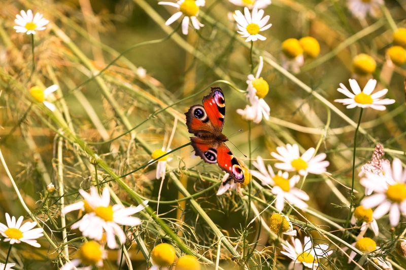 насекомые Насекомышиphoto preview