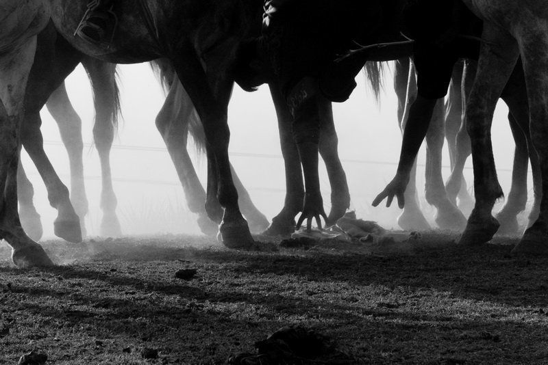 узбекистан, улак, бельдерсай, лошадь Горный Улакphoto preview